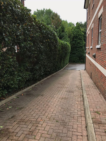 hedge cut for Walton-Dental-Arts in thealley
